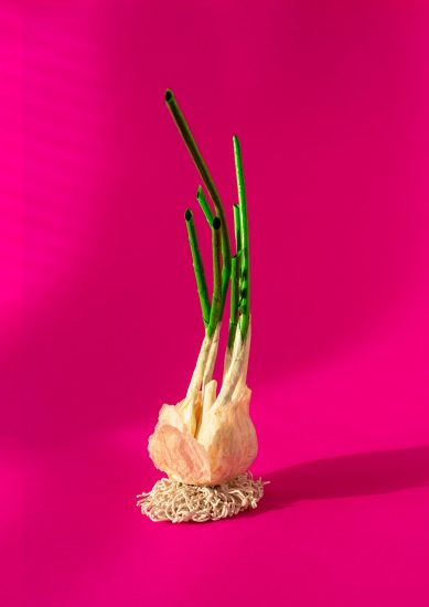 A clay and paper model of a sprouting garlic bulb on a bright pink background.