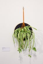 An artwork of a textile spider plant, embroidered and crocheted in wool.